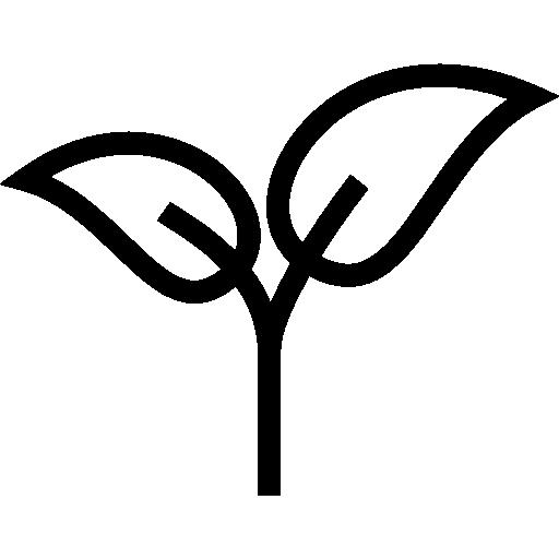 fleurs fraîches Conseils d'entretien