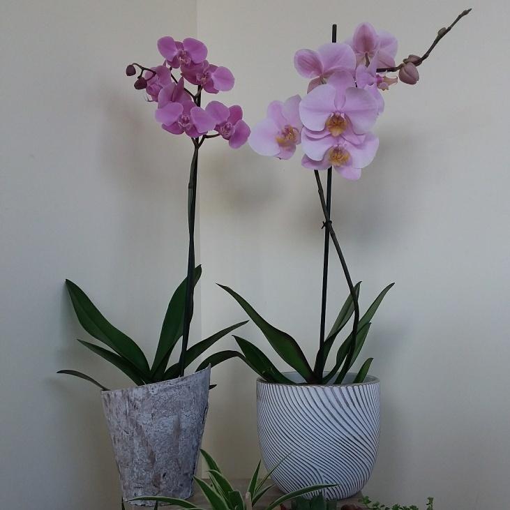Orchidée violette 1 branche