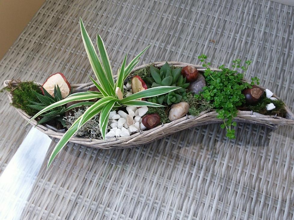 panière de plantes grasses